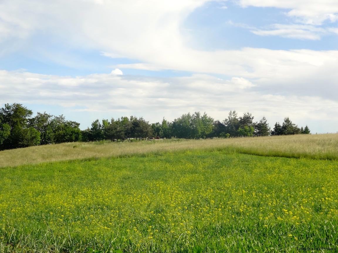 Polje Pr Mežnar
