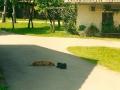 Pr Okornu na dvorišču