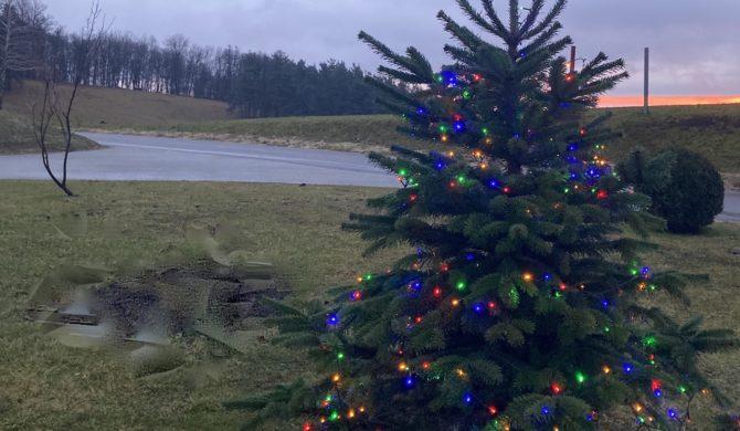 Božično drevo 2020:2